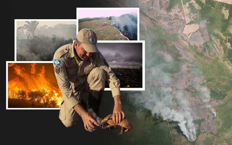 Are you aware of the Amazon wildfire, take this quiz to find out