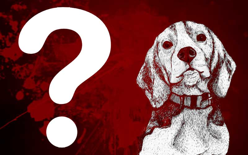 Puppy Killing in Kolkata Quiz