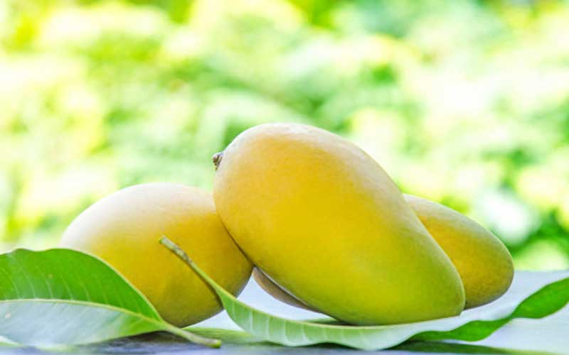 How much do you know about mango, play the quiz and answer the questions
